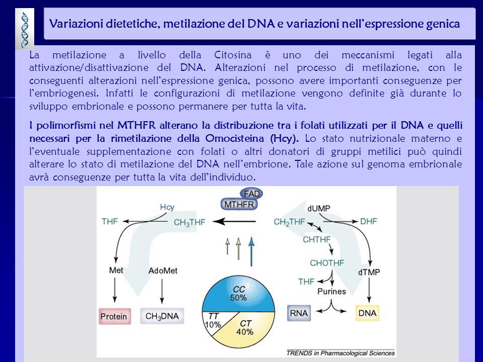 La metilazione a livello della Citosina è uno dei meccanismi legati alla attivazione/disattivazione del DNA. Alterazioni nel processo di metilazione,