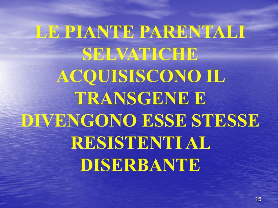 15 LE PIANTE PARENTALI SELVATICHE ACQUISISCONO IL TRANSGENE E DIVENGONO ESSE STESSE RESISTENTI AL DISERBANTE