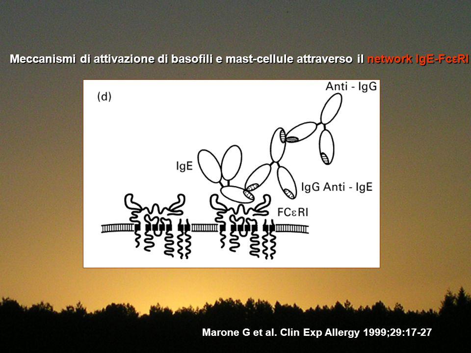 Meccanismi di attivazione di basofili e mast-cellule attraverso il network IgE-FcεRI Marone G et al. Clin Exp Allergy 1999;29:17-27