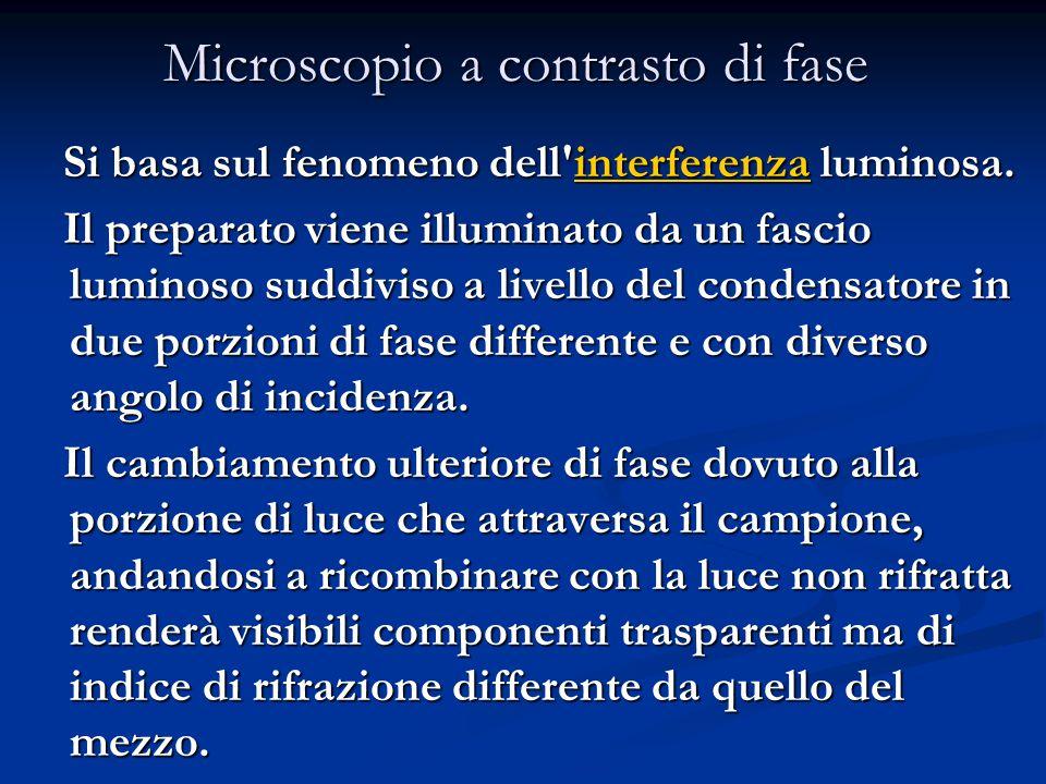 Si basa sul fenomeno dell'interferenza luminosa. interferenza Il preparato viene illuminato da un fascio luminoso suddiviso a livello del condensatore