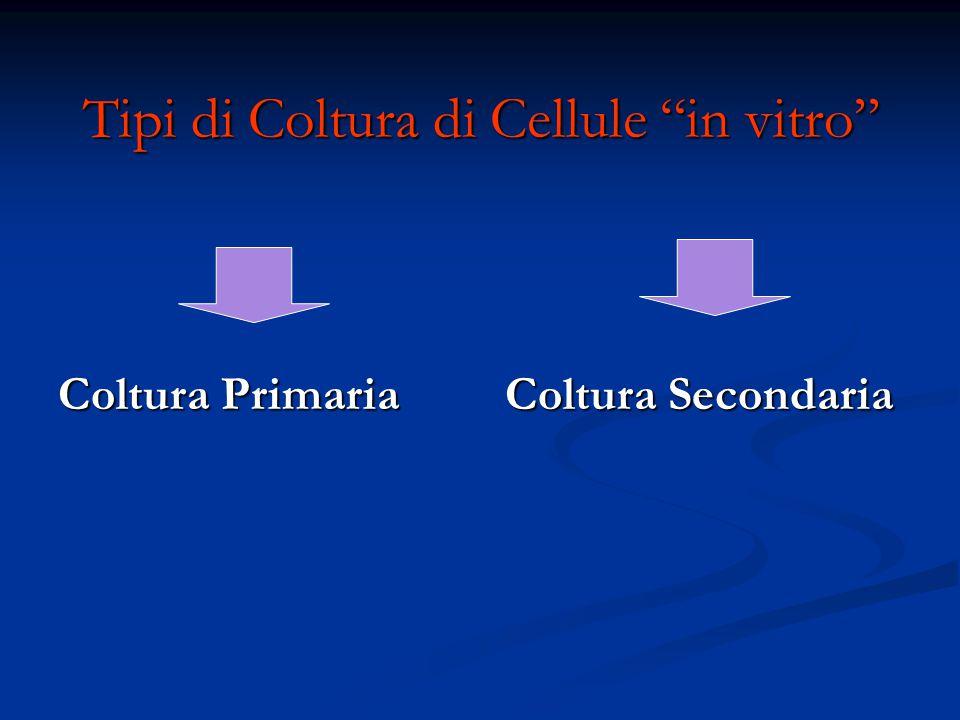 """Tipi di Coltura di Cellule """"in vitro"""" Coltura Primaria Coltura Secondaria Coltura Primaria Coltura Secondaria"""