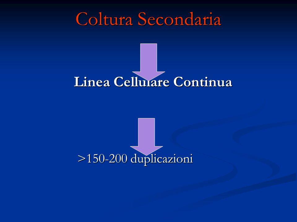 Coltura Secondaria Linea Cellulare Continua Linea Cellulare Continua >150-200 duplicazioni >150-200 duplicazioni