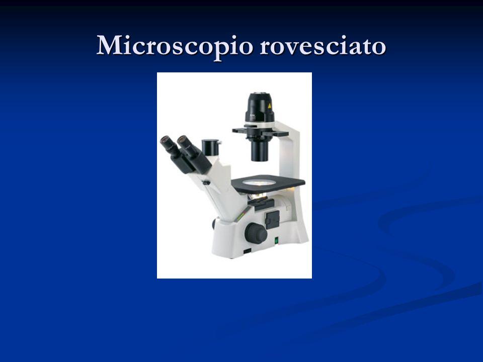 Microscopio rovesciato