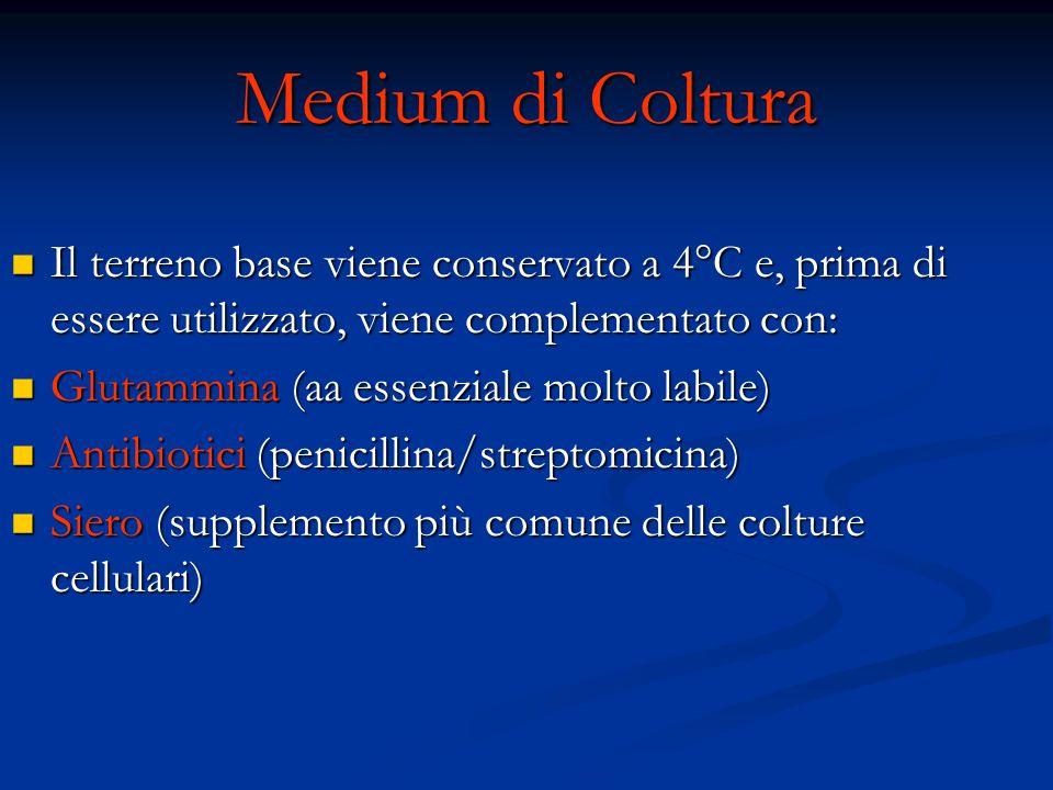 Medium di Coltura Il terreno base viene conservato a 4°C e, prima di essere utilizzato, viene complementato con: Il terreno base viene conservato a 4°