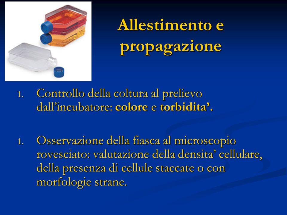 Allestimento e propagazione 1. Controllo della coltura al prelievo dall'incubatore: colore e torbidita'. 1. Osservazione della fiasca al microscopio r
