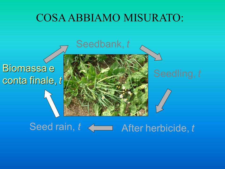 Seedbank, t After herbicide, t Seedling, t Seed rain, t COSA ABBIAMO MISURATO: Biomassa e conta finale, t