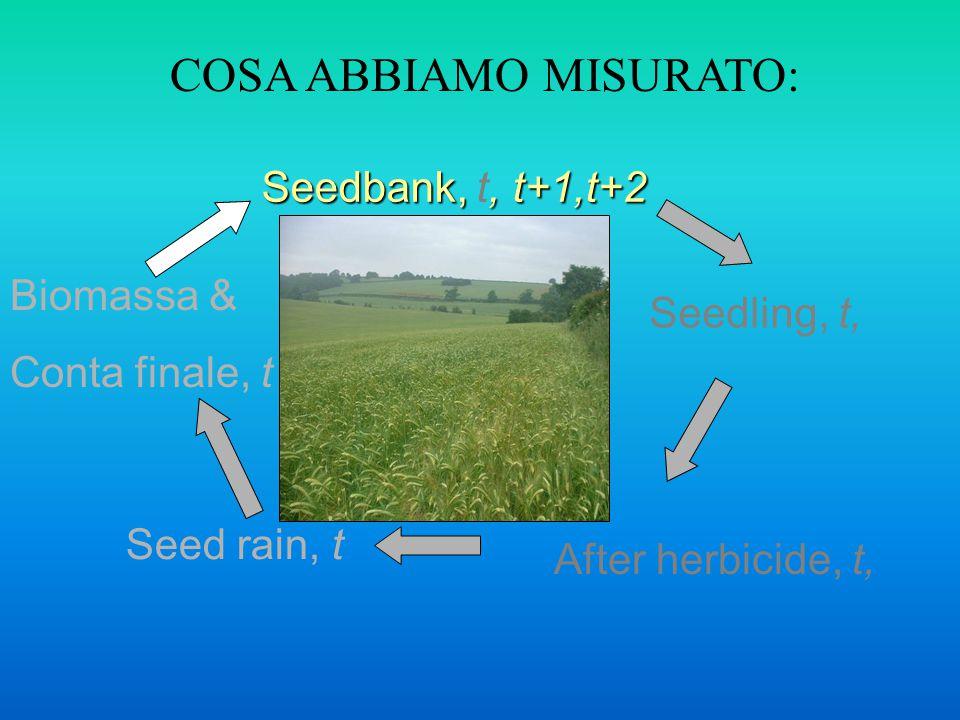 Seedbank,, t+1,t+2 Seedbank, t, t+1,t+2 Seedling, t, After herbicide, t, Seed rain, t Biomassa & Conta finale, t COSA ABBIAMO MISURATO: