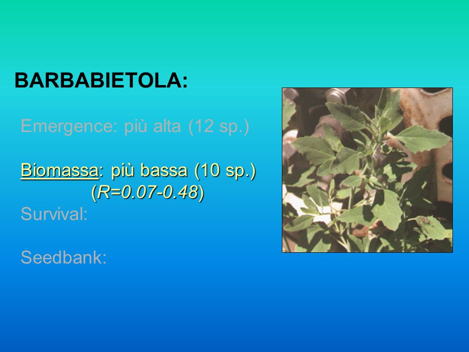 BARBABIETOLA: Emergence: più alta (12 sp.) Biomassa: più bassa (10 sp.) (R=0.07-0.48) Survival: Seedbank: