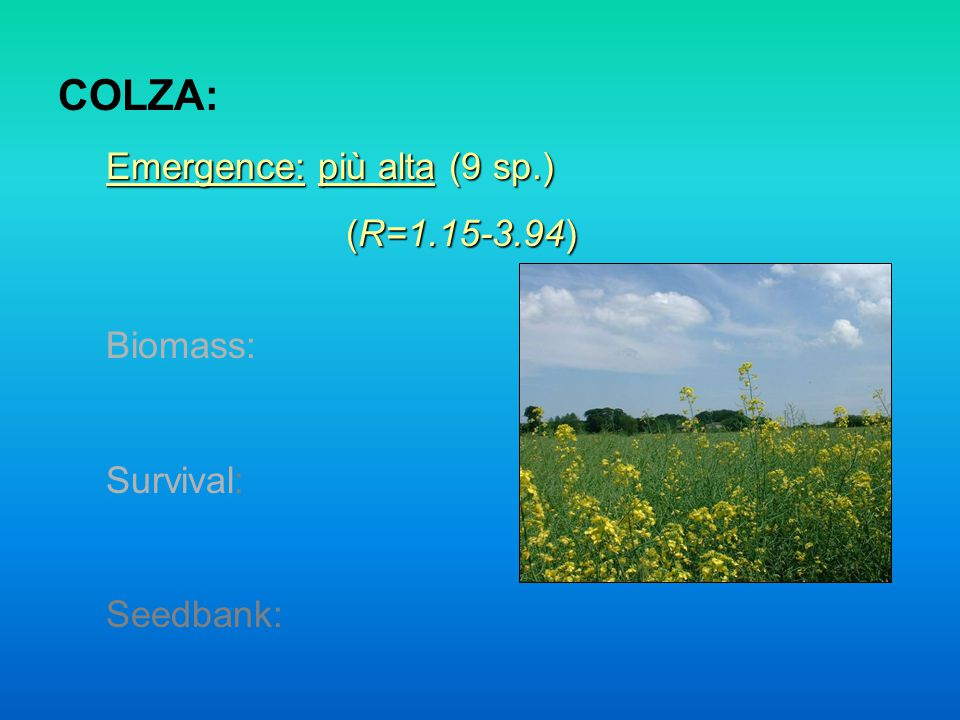 COLZA: Emergence: più alta (9 sp.) (R=1.15-3.94) Biomass: Survival: Seedbank: