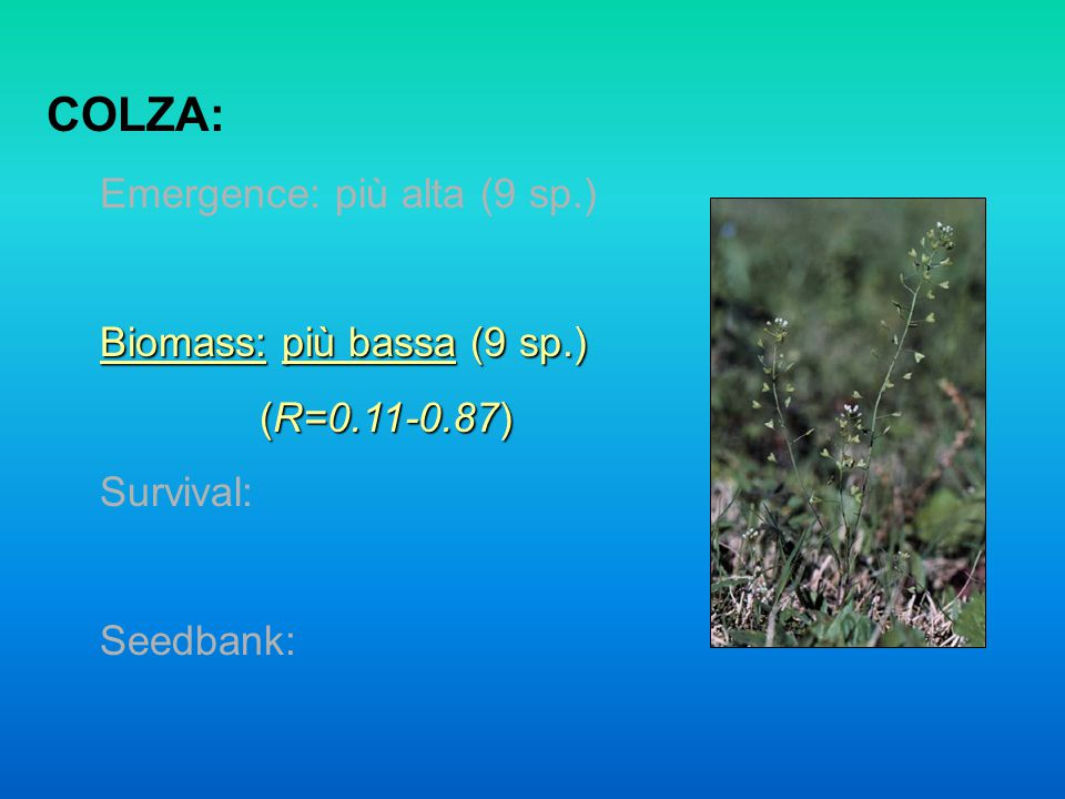 COLZA: Emergence: più alta (9 sp.) Biomass: più bassa (9 sp.) (R=0.11-0.87) Survival: Seedbank: