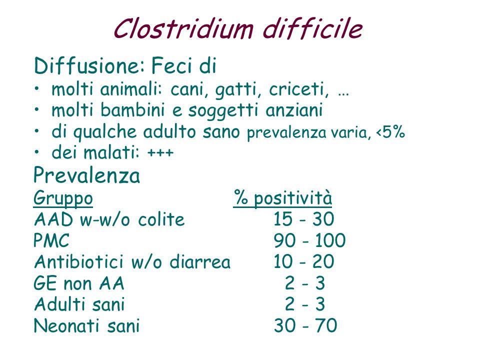 Clostridium difficile Diffusione: Feci di molti animali: cani, gatti, criceti, … molti bambini e soggetti anziani di qualche adulto sano prevalenza varia, <5% dei malati: +++ Prevalenza Gruppo % positività AAD w-w/o colite15 - 30 PMC90 - 100 Antibiotici w/o diarrea10 - 20 GE non AA 2 - 3 Adulti sani 2 - 3 Neonati sani 30 - 70