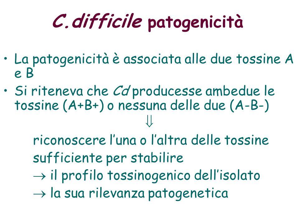 C.difficile patogenicità Patogenicità associata alle due tossine A e B Si riteneva che Cd producesse ambedue le tossine (A+B+) o nessuna delle due (A-B-) riconoscere l'una o l'altra delle tossine sufficiente per stabilire  il profilo tossinogenico dell'isolato  la sua rilevanza patogenetica  i ceppi non tossinogenici sono considerati non patogeni