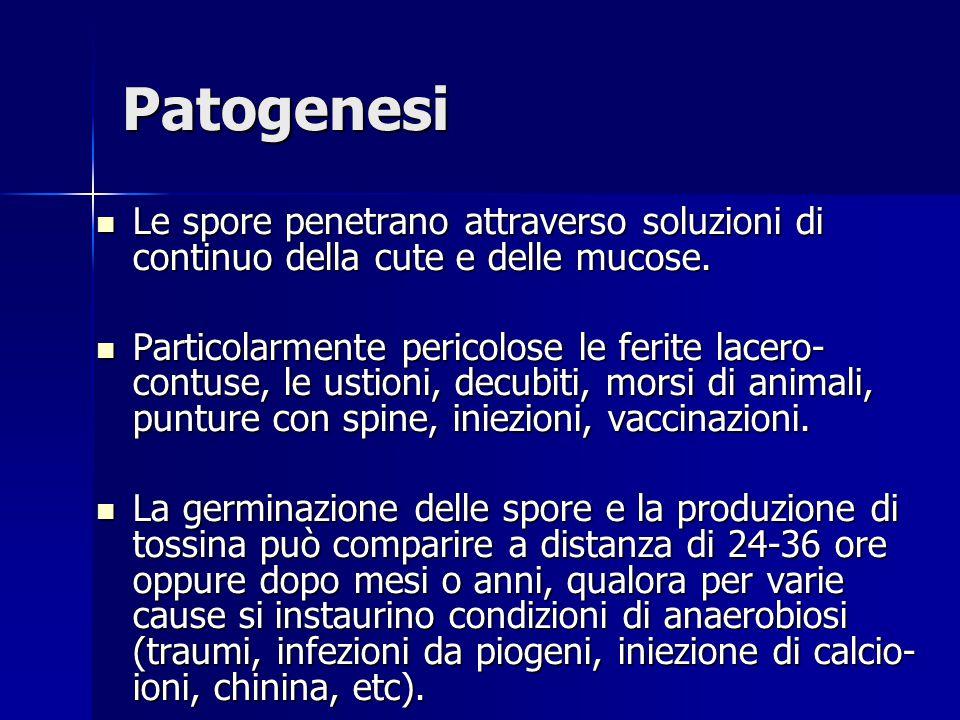 Patogenesi Le spore penetrano attraverso soluzioni di continuo della cute e delle mucose. Le spore penetrano attraverso soluzioni di continuo della cu