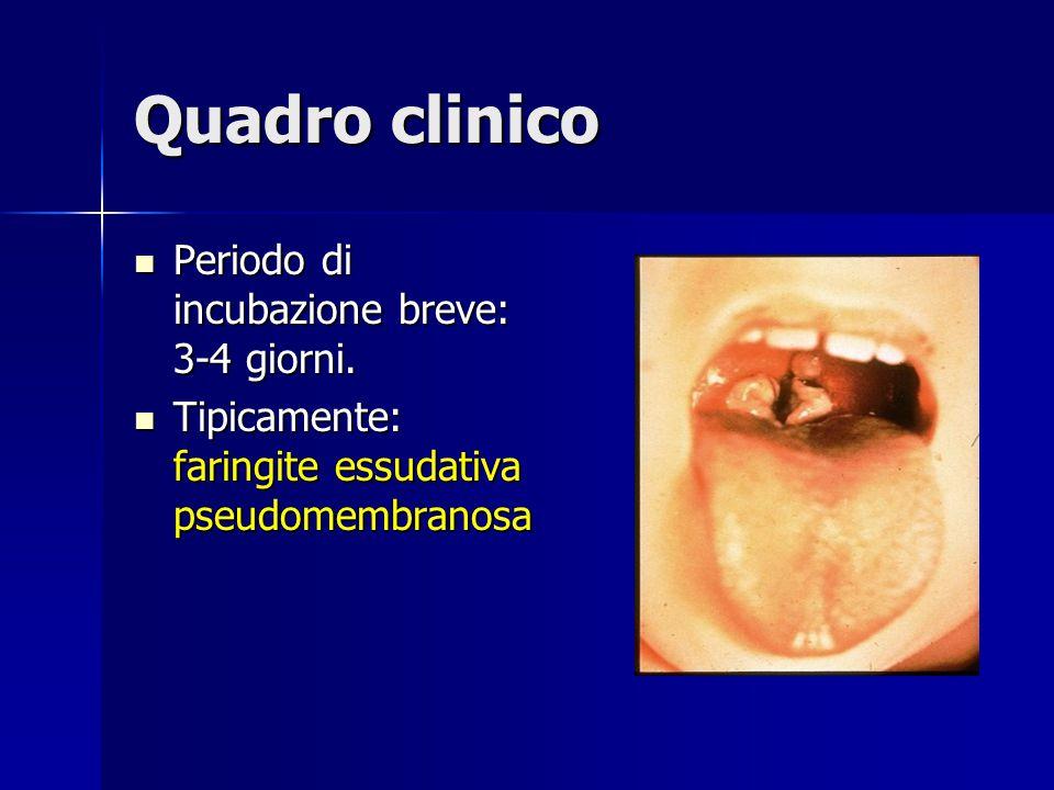 Quadro clinico Periodo di incubazione breve: 3-4 giorni. Periodo di incubazione breve: 3-4 giorni. Tipicamente: faringite essudativa pseudomembranosa
