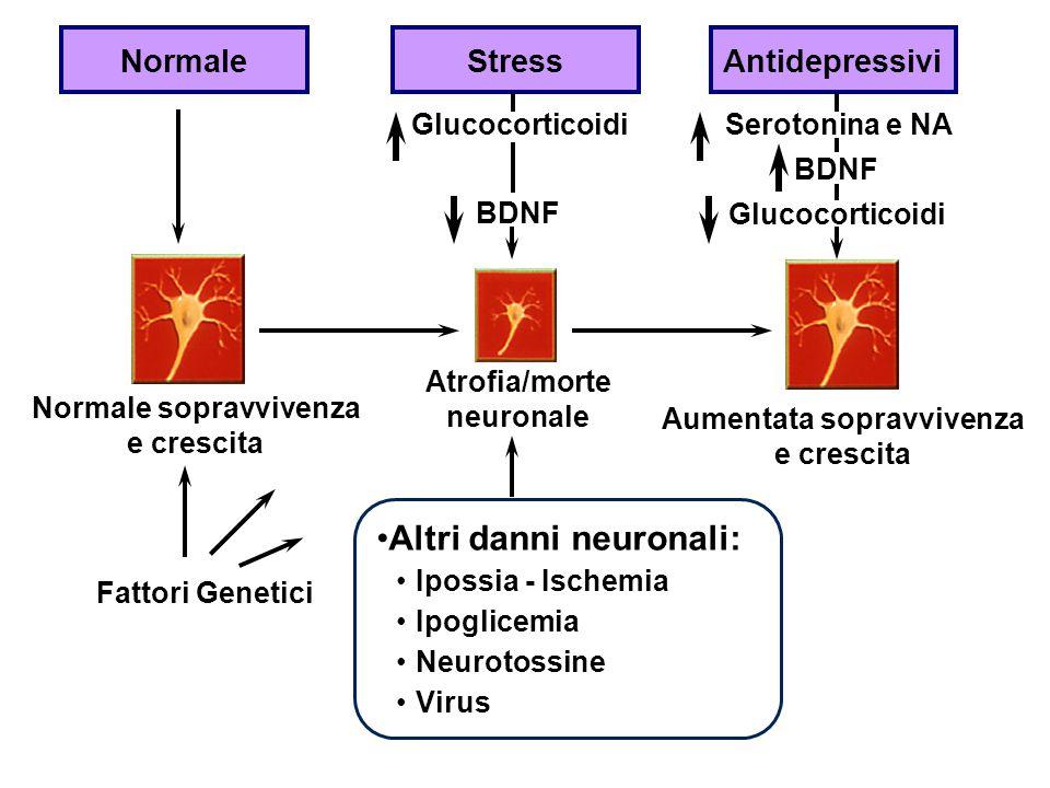 NormaleStressAntidepressivi GlucocorticoidiSerotonina e NA BDNF Glucocorticoidi BDNF Aumentata sopravvivenza e crescita Normale sopravvivenza e cresci