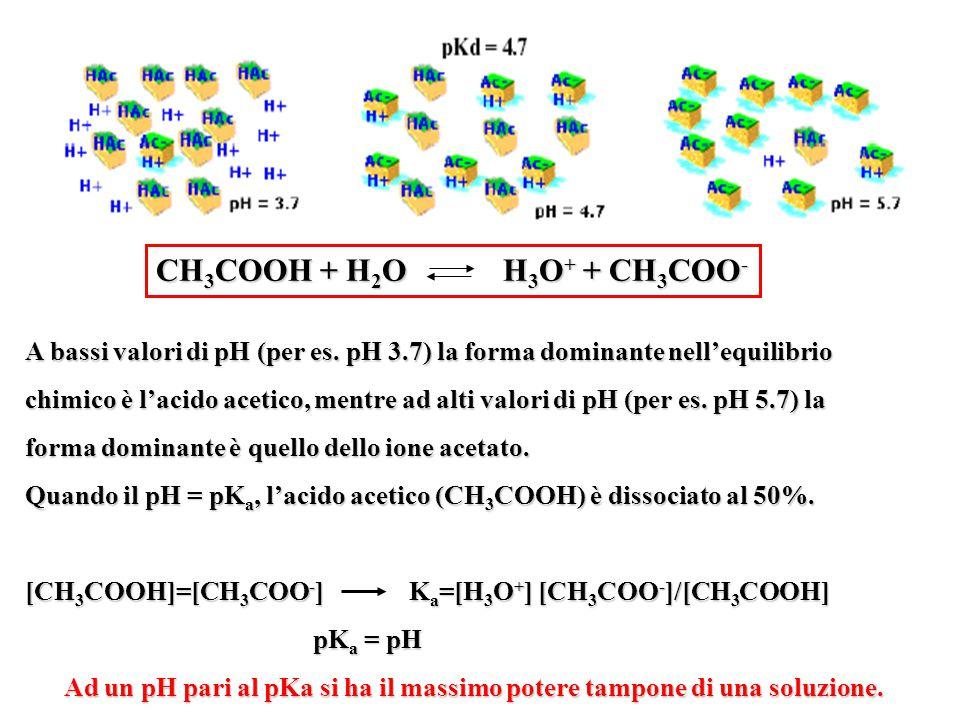 A bassi valori di pH (per es. pH 3.7) la forma dominante nell'equilibrio chimico è l'acido acetico, mentre ad alti valori di pH (per es. pH 5.7) la fo