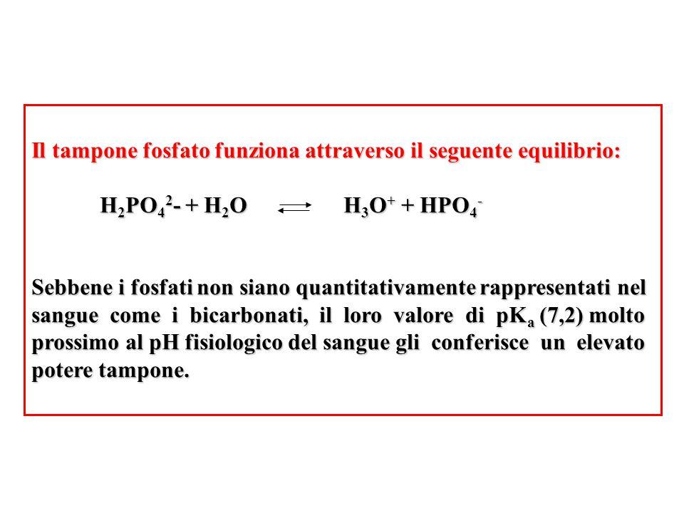 Il tampone fosfato funziona attraverso il seguente equilibrio: H 2 PO 4 2 - + H 2 O H 3 O + + HPO 4 - Sebbene i fosfati non siano quantitativamente ra