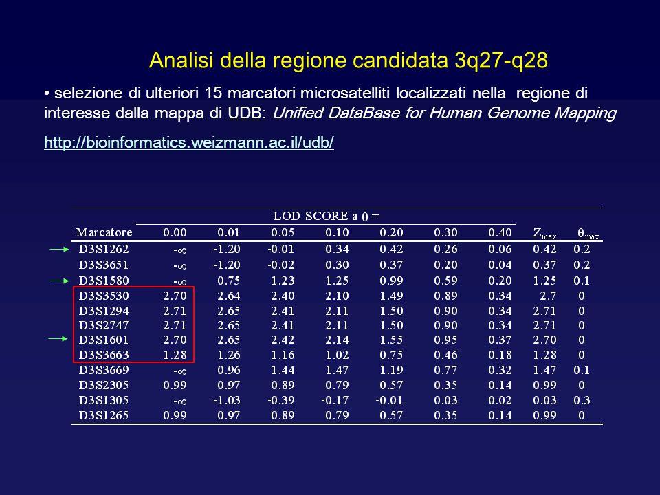 Analisi della regione candidata 3q27-q28 selezione di ulteriori 15 marcatori microsatelliti localizzati nella regione di interesse dalla mappa di UDB: