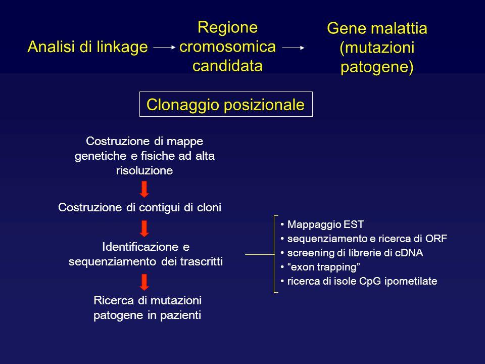 Analisi di linkage Regione cromosomica candidata Gene malattia (mutazioni patogene) Clonaggio posizionale Costruzione di mappe genetiche e fisiche ad