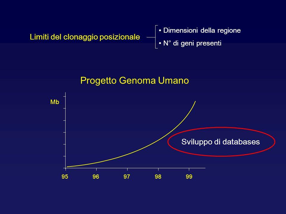 Limiti del clonaggio posizionale Dimensioni della regione N° di geni presenti 9596979899 Progetto Genoma Umano Mb Sviluppo di databases