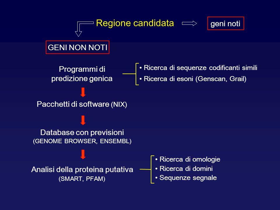 Regione candidata geni noti Programmi di predizione genica Ricerca di sequenze codificanti simili Ricerca di esoni (Genscan, Grail) Pacchetti di softw