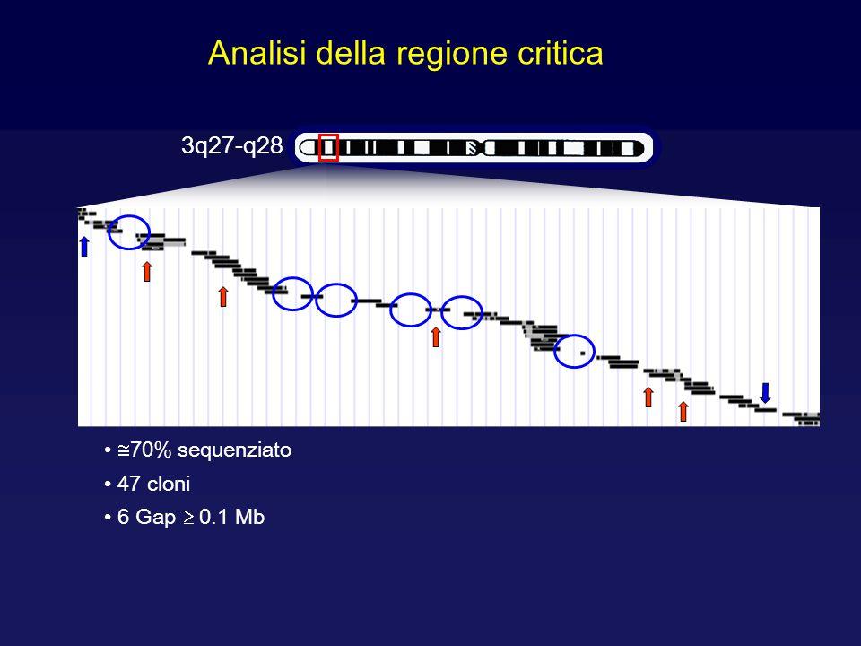 Analisi della regione critica 3q27-q28 47 cloni  70% sequenziato 6 Gap  0.1 Mb