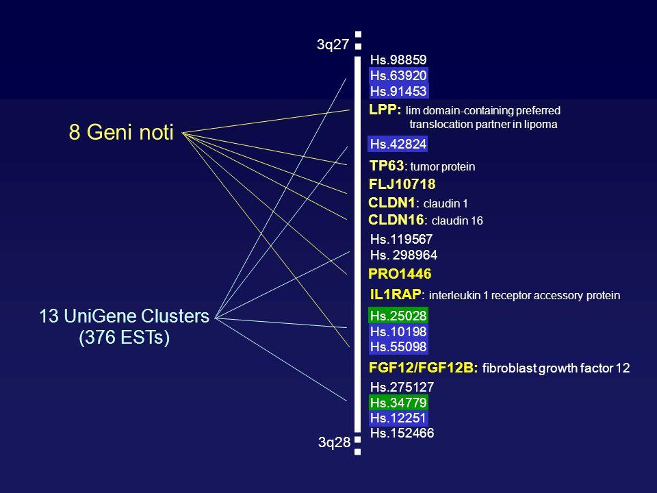8 Geni noti 13 UniGene Clusters (376 ESTs) 3q27 3q28 Hs.275127 Hs.34779 Hs.12251 Hs.152466 Hs.98859 Hs.63920 Hs.42824 Hs.91453 Hs.119567 Hs. 298964 Hs