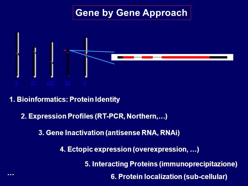 … Gene by Gene Approach 1.Bioinformatics: Protein Identity 2.