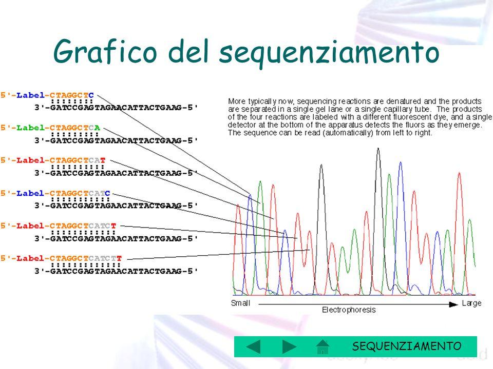 SEQUENZIAMENTO Grafico del sequenziamento