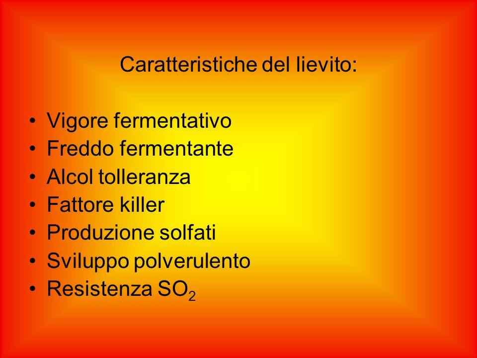Caratteristiche del lievito: Vigore fermentativo Freddo fermentante Alcol tolleranza Fattore killer Produzione solfati Sviluppo polverulento Resistenz