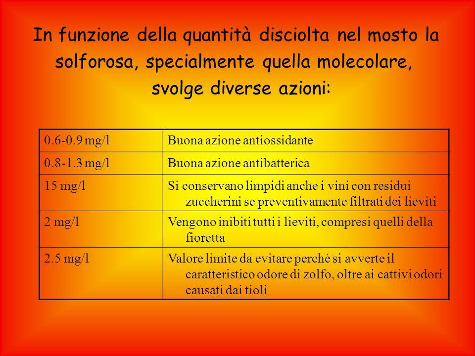 In funzione della quantità disciolta nel mosto la solforosa, specialmente quella molecolare, svolge diverse azioni: 0.6-0.9 mg/lBuona azione antiossidante 0.8-1.3 mg/lBuona azione antibatterica 15 mg/lSi conservano limpidi anche i vini con residui zuccherini se preventivamente filtrati dei lieviti 2 mg/lVengono inibiti tutti i lieviti, compresi quelli della fioretta 2.5 mg/lValore limite da evitare perché si avverte il caratteristico odore di zolfo, oltre ai cattivi odori causati dai tioli