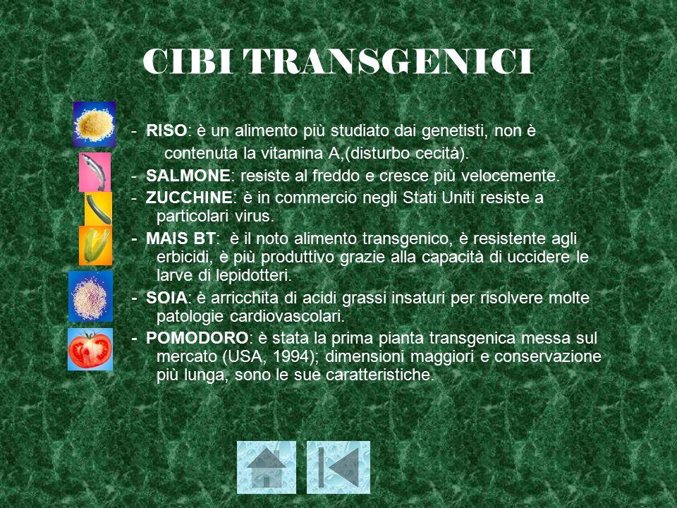 CIBI TRANSGENICI - RISO: è un alimento più studiato dai genetisti, non è contenuta la vitamina A,(disturbo cecità). - SALMONE: resiste al freddo e cre
