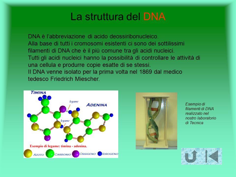 La struttura del DNA DNA è l'abbreviazione di acido deossiribonucleico. Alla base di tutti i cromosomi esistenti ci sono dei sottilissimi filamenti di