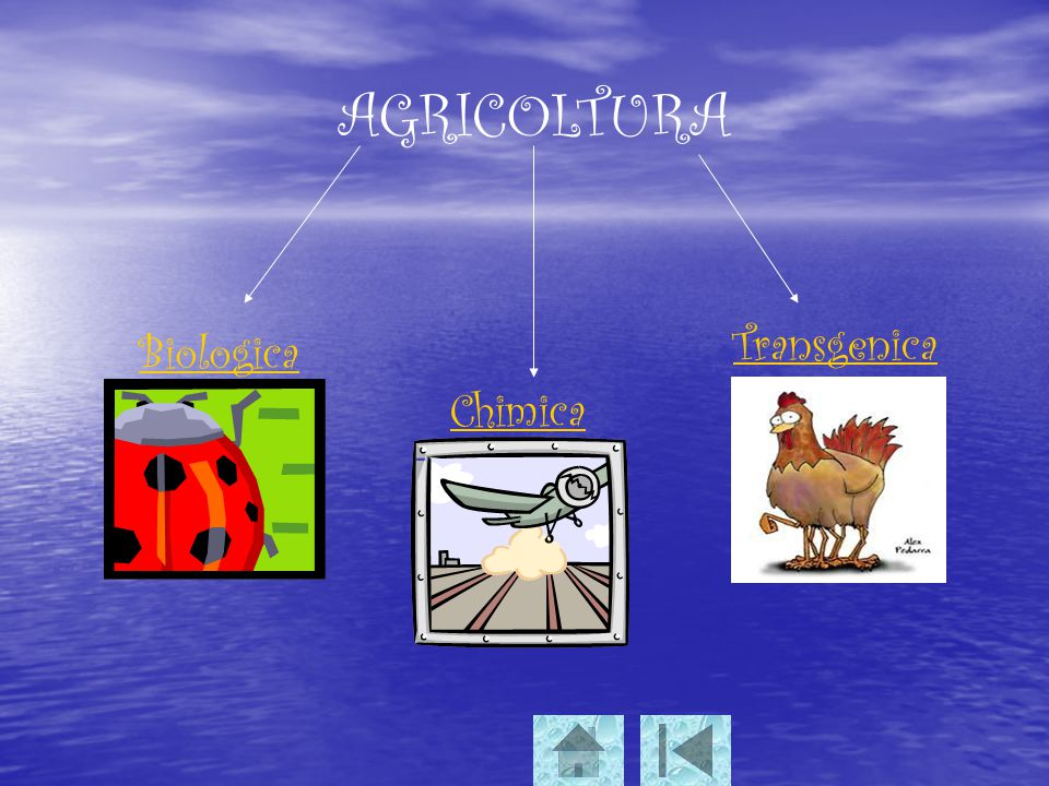 AGRICOLTURA Biologica Chimica Transgenica