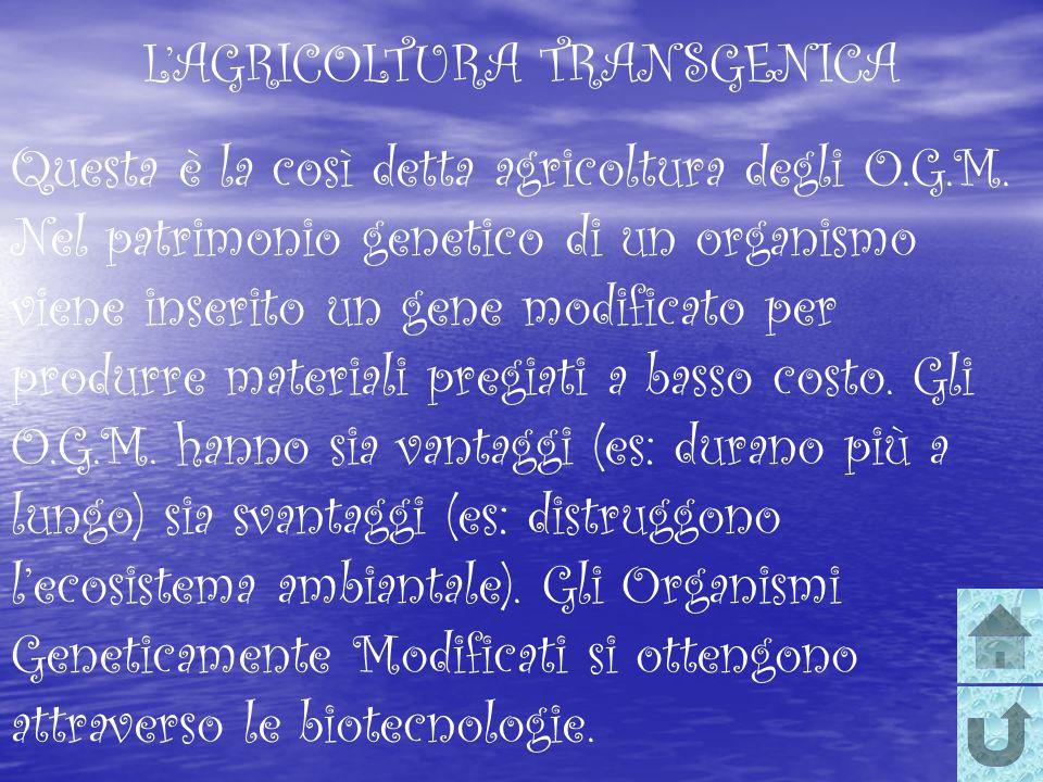 L'AGRICOLTURA TRANSGENICA Questa è la così detta agricoltura degli O.G.M. Nel patrimonio genetico di un organismo viene inserito un gene modificato pe