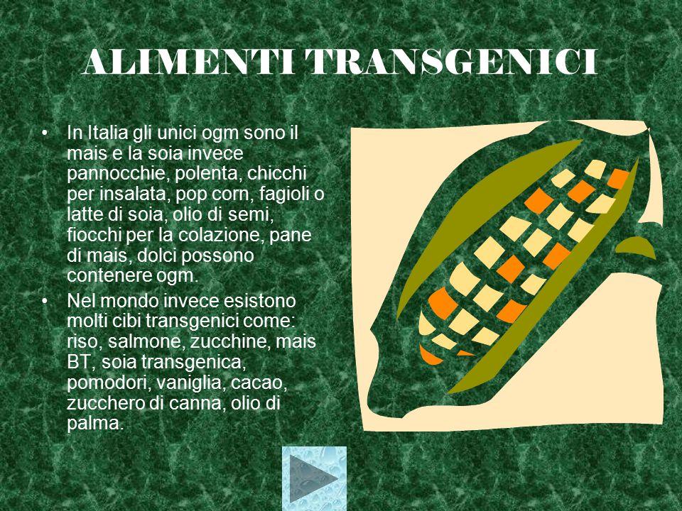 ALIMENTI TRANSGENICI In Italia gli unici ogm sono il mais e la soia invece pannocchie, polenta, chicchi per insalata, pop corn, fagioli o latte di soia, olio di semi, fiocchi per la colazione, pane di mais, dolci possono contenere ogm.