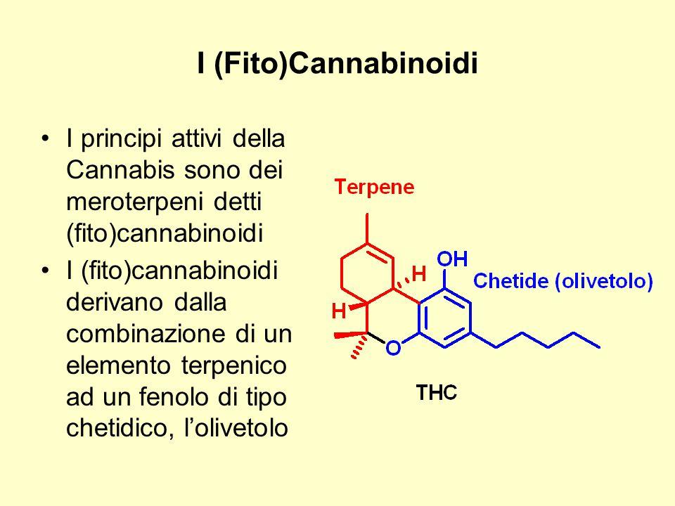 I (Fito)Cannabinoidi I principi attivi della Cannabis sono dei meroterpeni detti (fito)cannabinoidi I (fito)cannabinoidi derivano dalla combinazione d