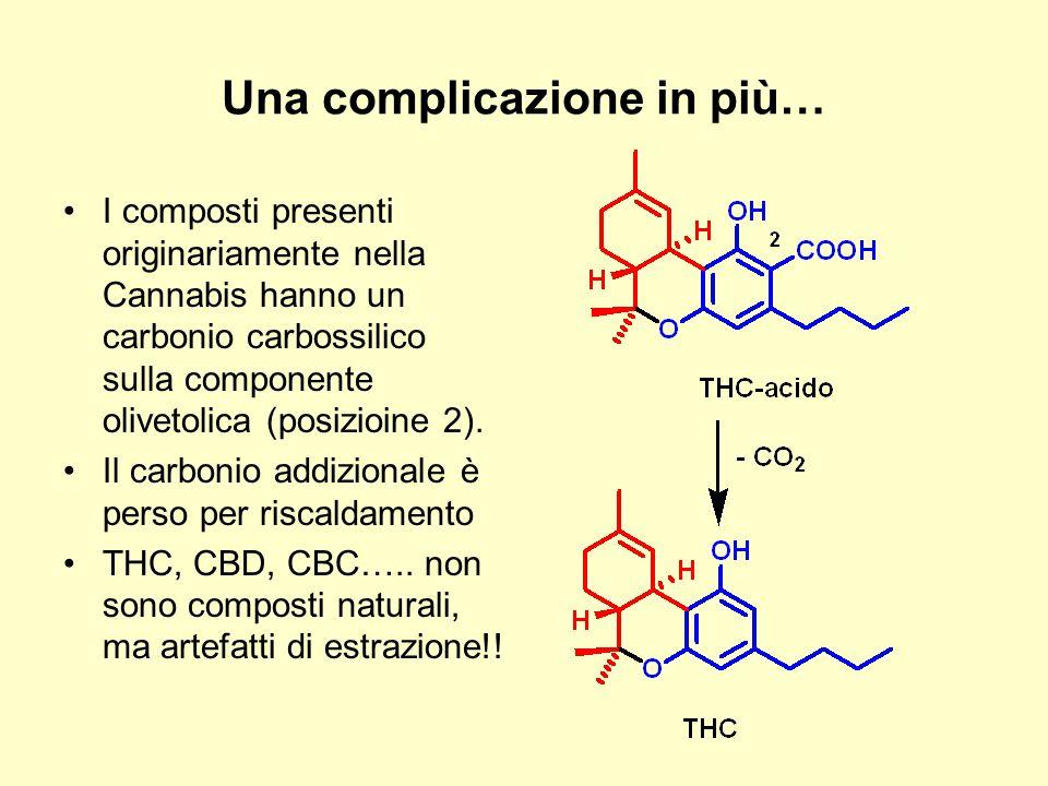 Una complicazione in più… I composti presenti originariamente nella Cannabis hanno un carbonio carbossilico sulla componente olivetolica (posizioine 2