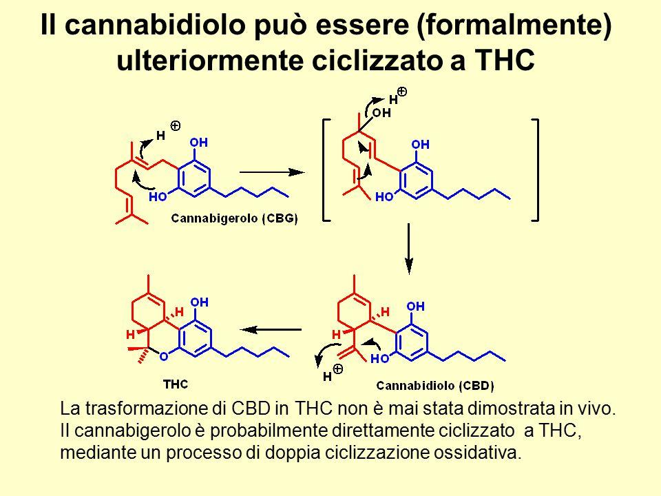 Il cannabidiolo può essere (formalmente) ulteriormente ciclizzato a THC La trasformazione di CBD in THC non è mai stata dimostrata in vivo. Il cannabi