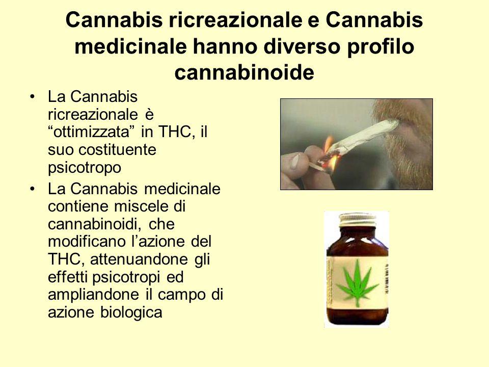 """Cannabis ricreazionale e Cannabis medicinale hanno diverso profilo cannabinoide La Cannabis ricreazionale è """"ottimizzata"""" in THC, il suo costituente p"""