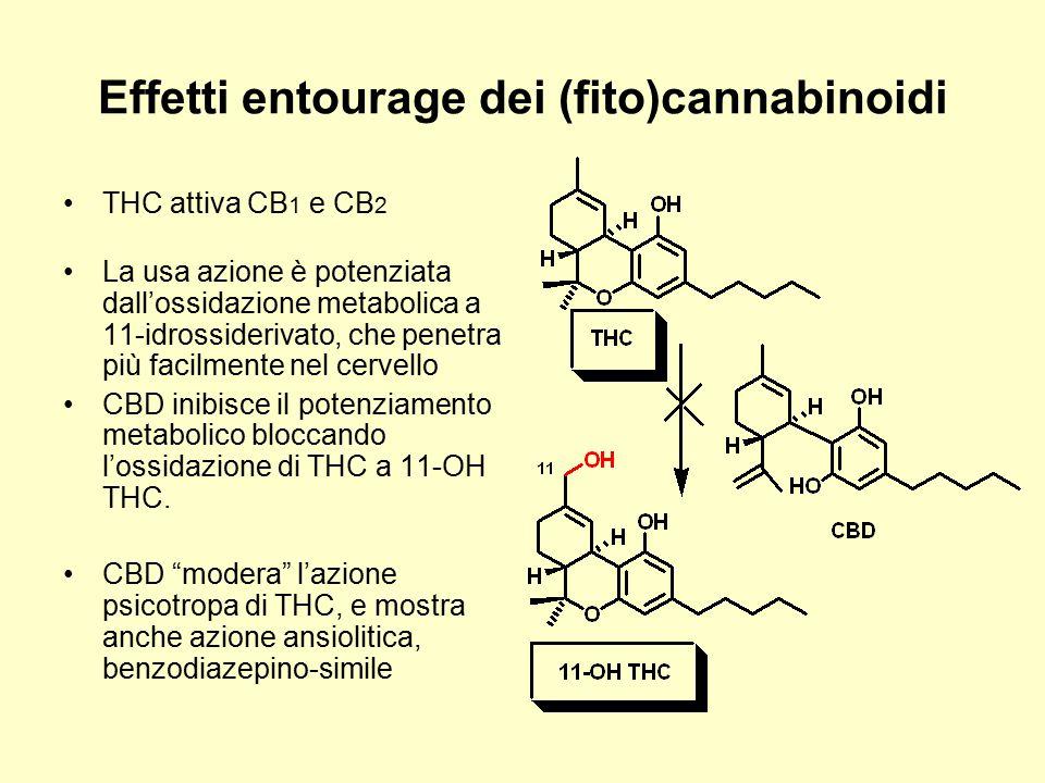 Effetti entourage dei (fito)cannabinoidi THC attiva CB 1 e CB 2 La usa azione è potenziata dall'ossidazione metabolica a 11-idrossiderivato, che penet