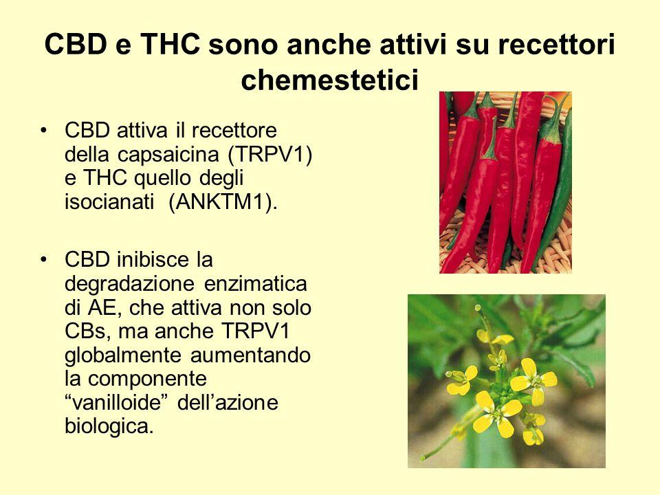 CBD e THC sono anche attivi su recettori chemestetici CBD attiva il recettore della capsaicina (TRPV1) e THC quello degli isocianati (ANKTM1). CBD ini