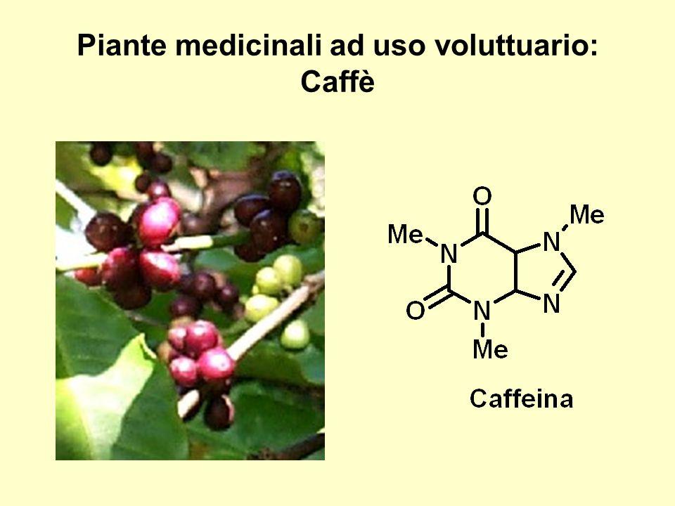 Piante medicinali ad uso voluttuario: Caffè