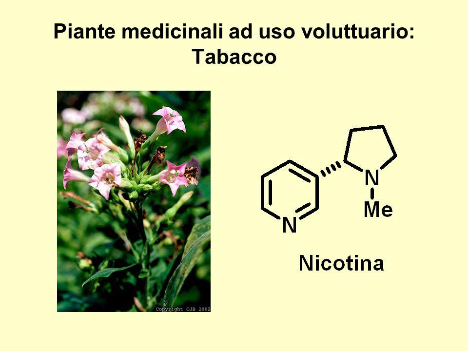 Piante medicinali ad uso voluttuario: Tabacco