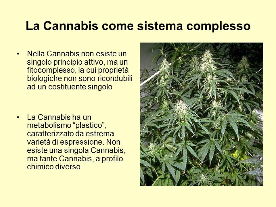 La Cannabis come sistema complesso Nella Cannabis non esiste un singolo principio attivo, ma un fitocomplesso, la cui proprietà biologiche non sono ri