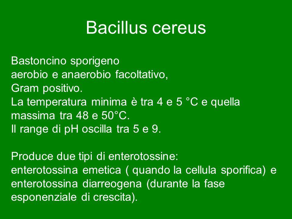 Bacillus cereus Bastoncino sporigeno aerobio e anaerobio facoltativo, Gram positivo. La temperatura minima è tra 4 e 5 °C e quella massima tra 48 e 50