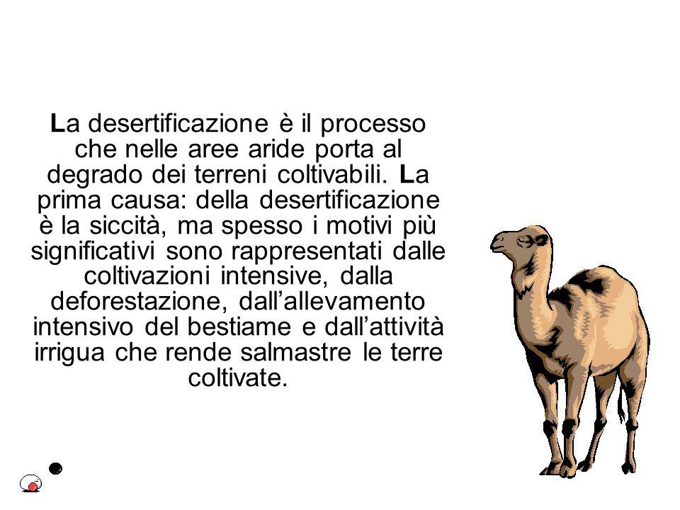 La desertificazione è il processo che nelle aree aride porta al degrado dei terreni coltivabili. La prima causa: della desertificazione è la siccità,