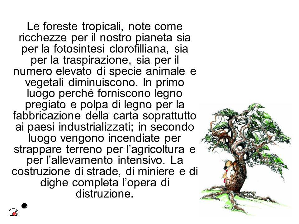 Le foreste tropicali, note come ricchezze per il nostro pianeta sia per la fotosintesi clorofilliana, sia per la traspirazione, sia per il numero elev