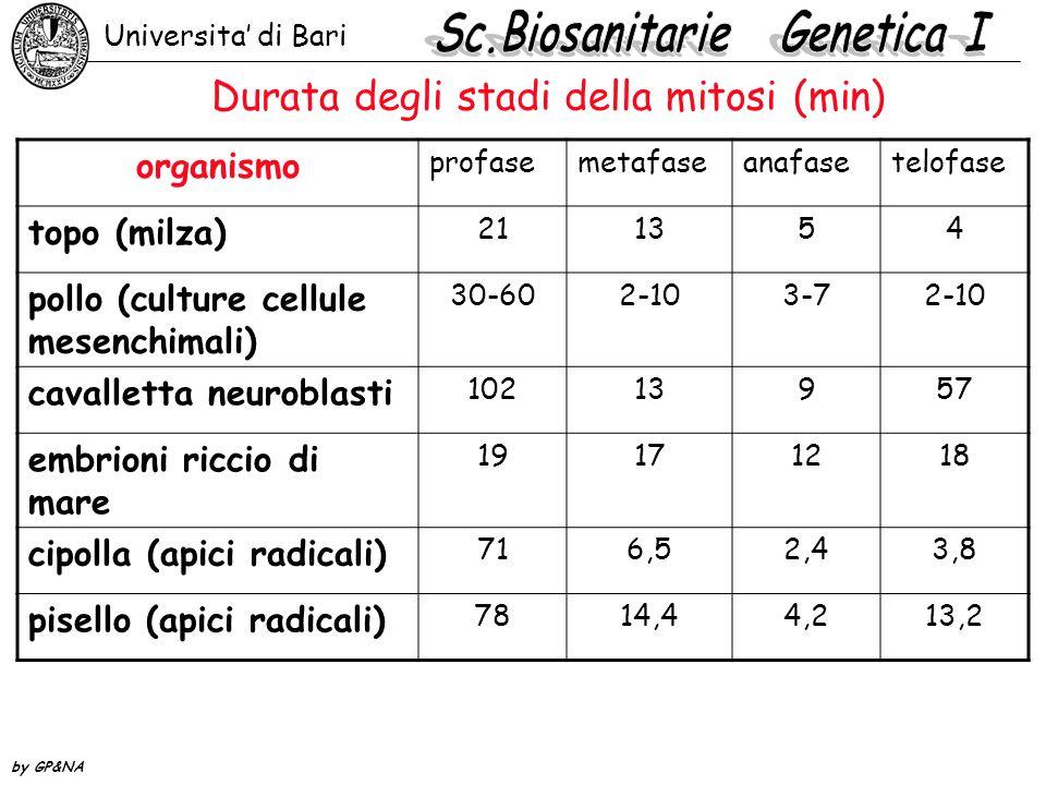 Durata degli stadi della mitosi (min) organismo profasemetafaseanafasetelofase topo (milza) 211354 pollo (culture cellule mesenchimali) 30-602-103-72-