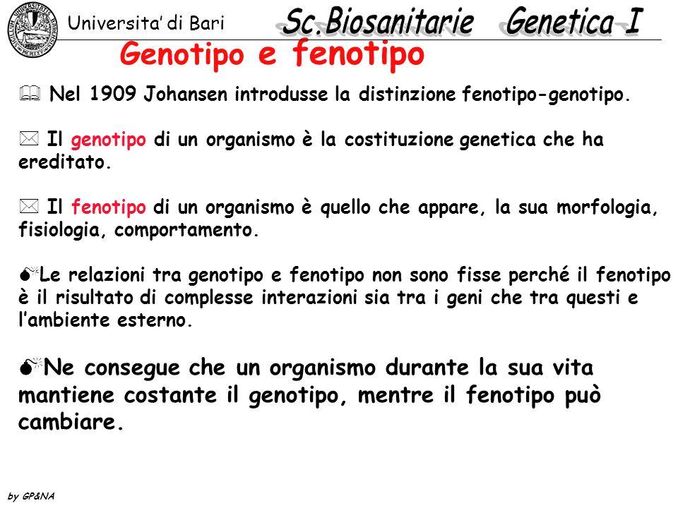 Genotipo e fenotipo  Nel 1909 Johansen introdusse la distinzione fenotipo-genotipo. * Il genotipo di un organismo è la costituzione genetica che ha e
